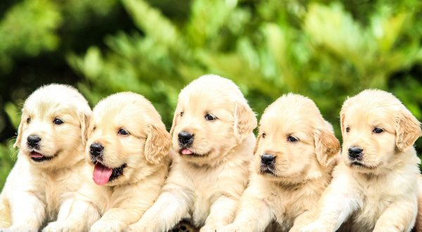 Best Puppy Cams